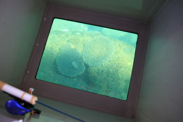 サンゴだ。