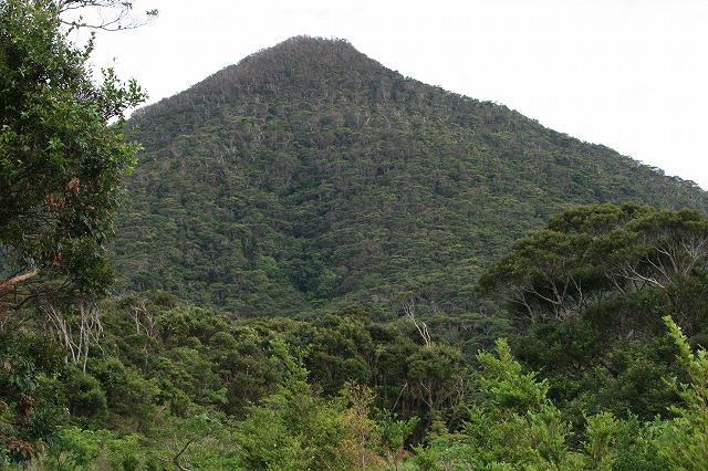 沖縄の森林地帯。通称「やんばる」へ。