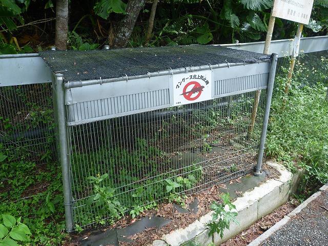 こちらはマングースの侵入防止柵。