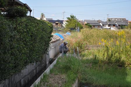 草をポキポキ折ってるおじいちゃん。