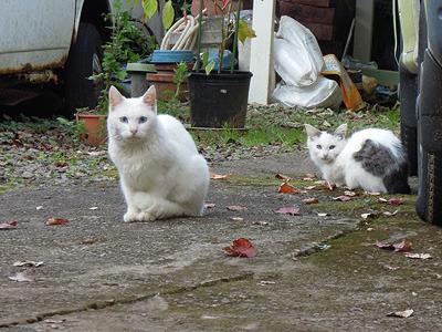 なお、武家屋敷の隣は猫屋敷でした(一般家屋)