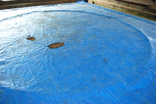 草相撲の大会も開かれる本格的な土俵
