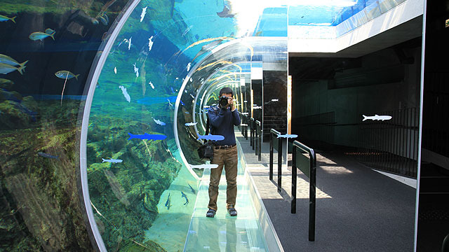 九州の有名水族館5つを巡ってきたレポートです。