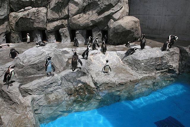 その名の通り、ペンギンがたくさんいる。