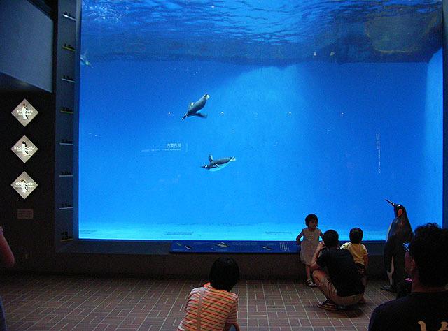鳥だということを忘れてしまうほど、ものすごい速さでペンギンが泳いでいる。 (ペンギンをこういう視点で見られる水槽は他で見たことない)