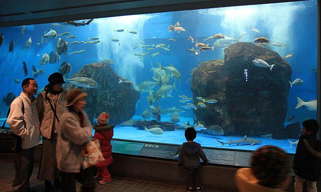 ペンギンだけではなく、普通の魚もたくさんいて「水族館」を満喫できる。