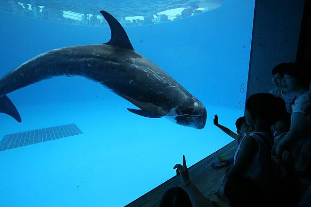 イルカが近づいて来てくれると嬉しい。