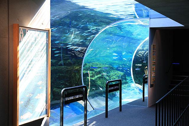 こちらは水槽の内側に少し入り込むことができるゾーン。