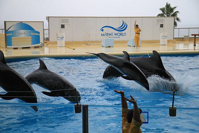 クジラも混じっている。