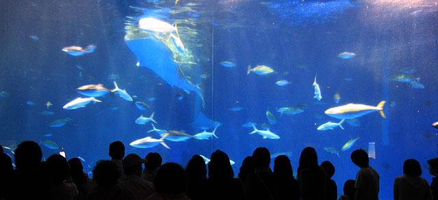 その先に待っているのはジンベイザメがいる大水槽。