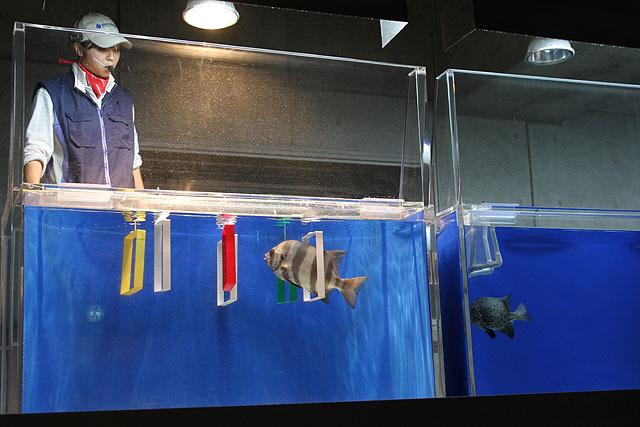 1966年、世界で初めて実現したという魚の輪くぐりが受け継がれている。