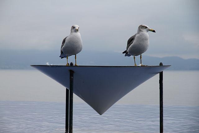 期せずして鳥の凄さを実感。(しかしタッチプールとしてはこれでいいのだろうか…?)