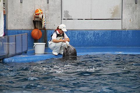 けなげにエサを食べる新米イルカ。