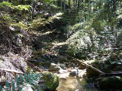 遭難中に飲んだ川の水が美味かった。あと、野生のシカとリスに会えたのでそれはそれでまあ楽しかった。