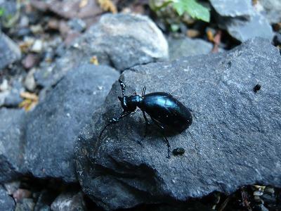 道端で見つけた虫の写真を撮影してみたり。