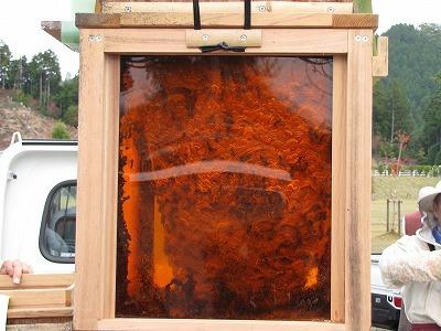 なんとオレンジ色の部分は透明で中を観察できる。
