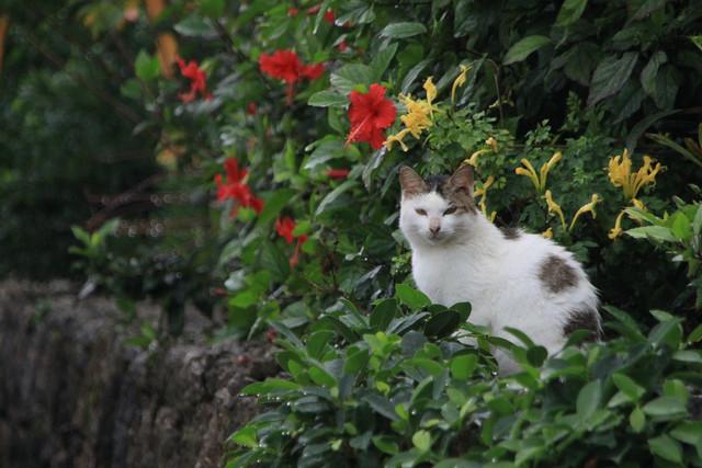 南国の花々に囲まれた猫さんが神々しかった