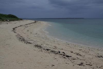 ウミガメが産卵する砂浜もある
