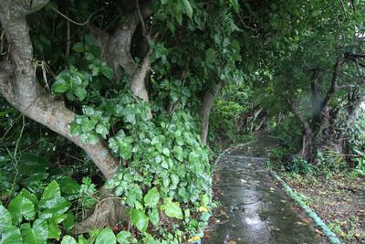 道路脇の歩道がジャングル