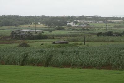 島内にはサトウキビ畑や牧場が広がっている