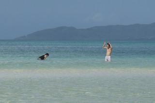 竹富島のビーチでは、ナマコを投げ合ってるカップルが印象的だった