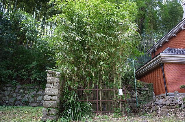 四角竹がある。