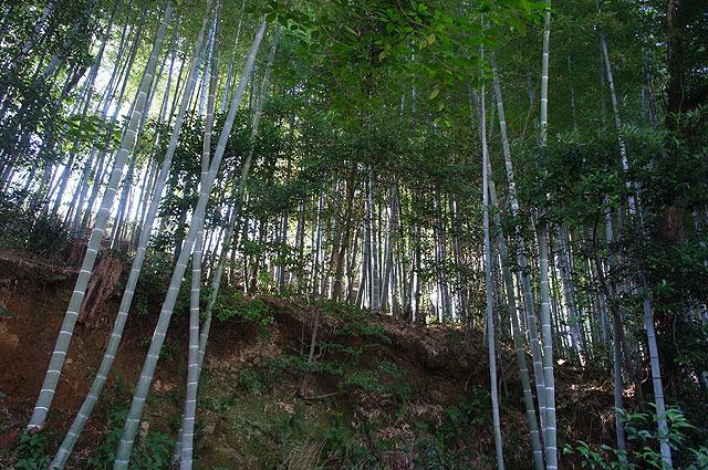 後ろは思いっきり竹藪。