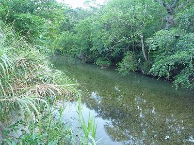 そんなわけでやってきました。スッポンの暮らす沖縄の河川。