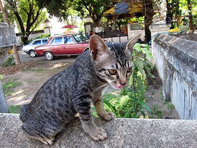 寺でごはん食べてた子猫。頭にごはん粒ついてる