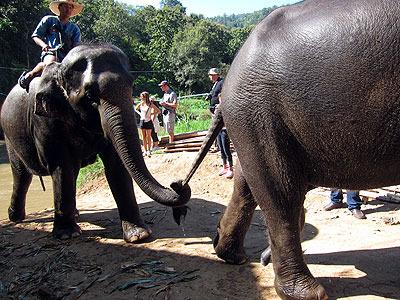 エレファントキャンプにて。手をつないで歩く象。