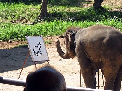 絵を描く象。適当に筆持って動かすだろうとおもって舐めてかかってたら、普通にうまかった。賢い