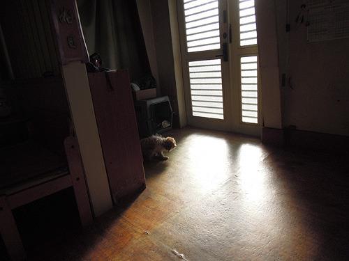 飼い主のエピソードに聞き入る犬