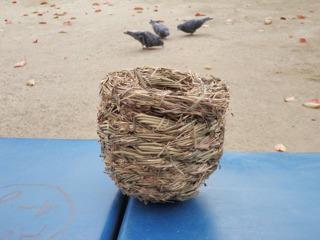 鳥の巣なんだが、ハトは全然興味なさそう