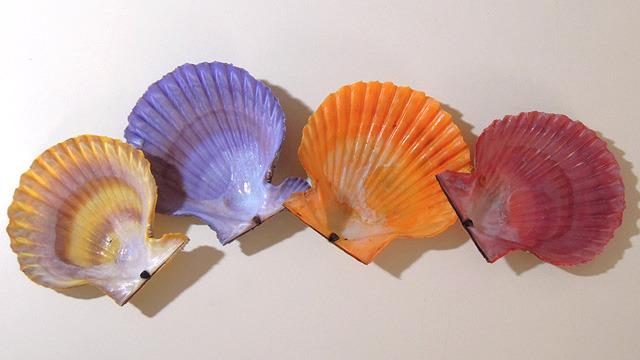 これがヒオウギ貝です