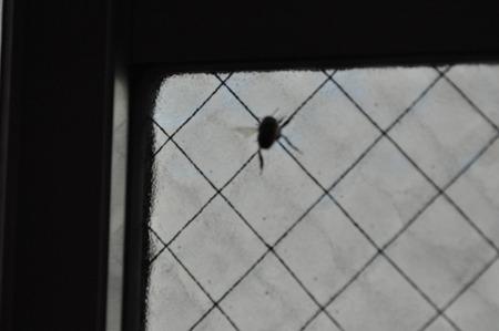 蜂の写真撮るの難しかった…。