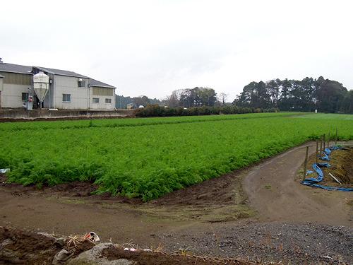 にんじん畑が多く、近くには「にんじん」というホームセンターがある