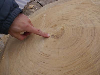 これも傷。木が若い頃に枝分かれした跡らしい。