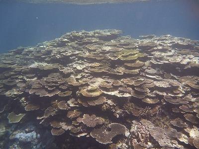 沖縄と言えばサンゴの海。