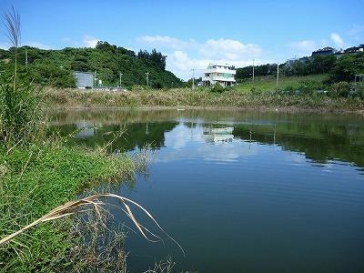 やって来たのはとあるため池。