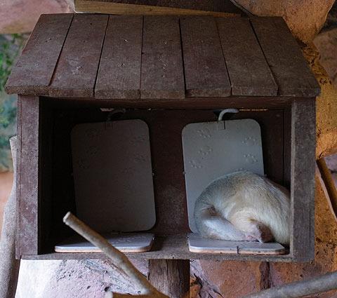 暖房器具っぽいマットの上で寝ていた。