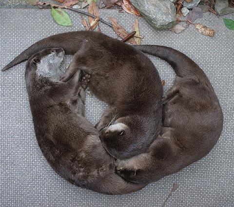 仲間を枕にしてるところがすごくいい。
