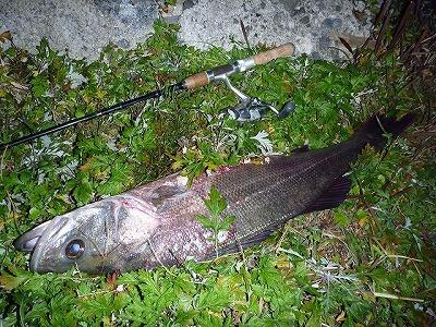 代わりになぜか大きなスズキが釣れた。カニ釣りの外道でスズキを釣った人間は僕くらいのものではないだろうか。