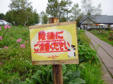 花?(北海道で花の写真これしかなかった)