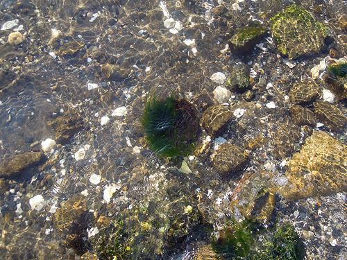 これは藻玉か