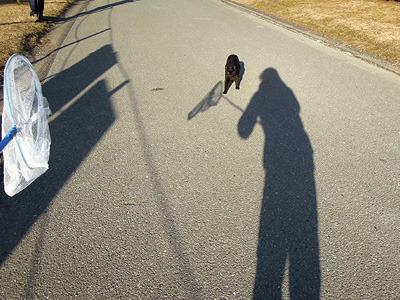 近づいてきちゃう猫は逆にやりづらい、それが影いじめ