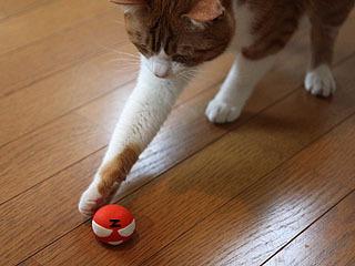 猫がZくんを襲うのです。