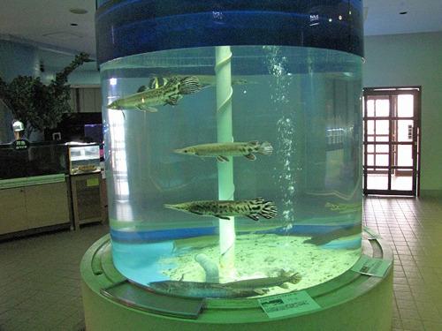 一見すると淡水魚メインに見えるが…。