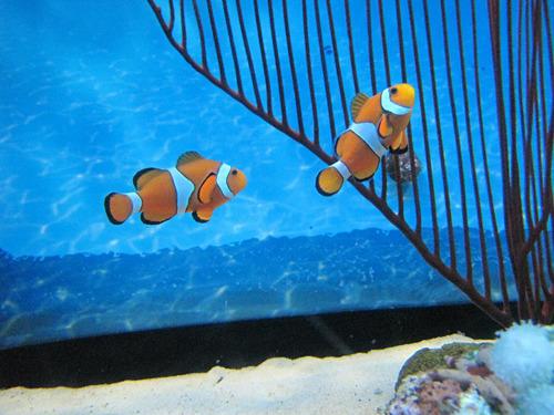 そりゃせっかく水族館に来たんだもの。普段家の近所で見てる魚もいいけど、やっぱりニモとかにも会いたいよね。