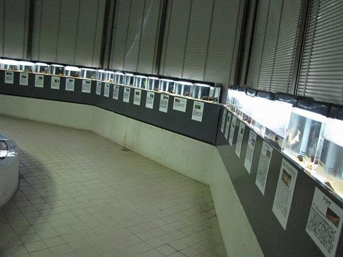 霞ケ浦をホームグラウンドに持つだけあって国産淡水魚ももちろん豊富。