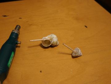 バトルロワイヤルを生き残った貝たち。貝殻だから既に息絶えてるけども。